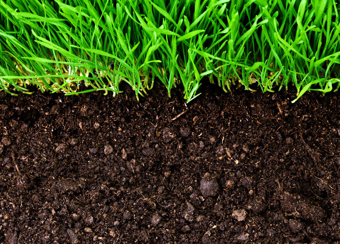 You need to know the importance of organic soil matter for Where to find soil