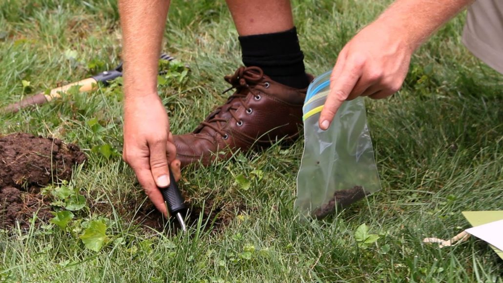 Test the soil to know how to improve the soil.