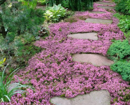 Enhance Any Landscape With Live Mulch