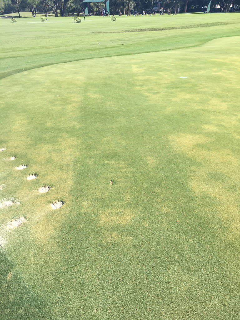 Dryject with Mirimichi Green test strip