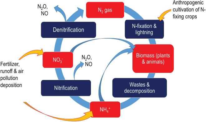 human fixed nitrogen