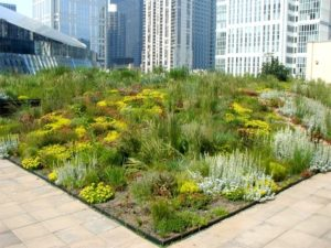 Green roof offers benefits for environment