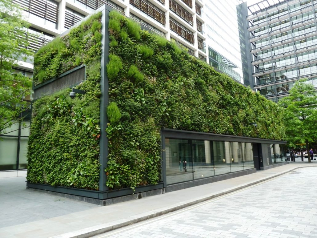 Green wall in urban areas