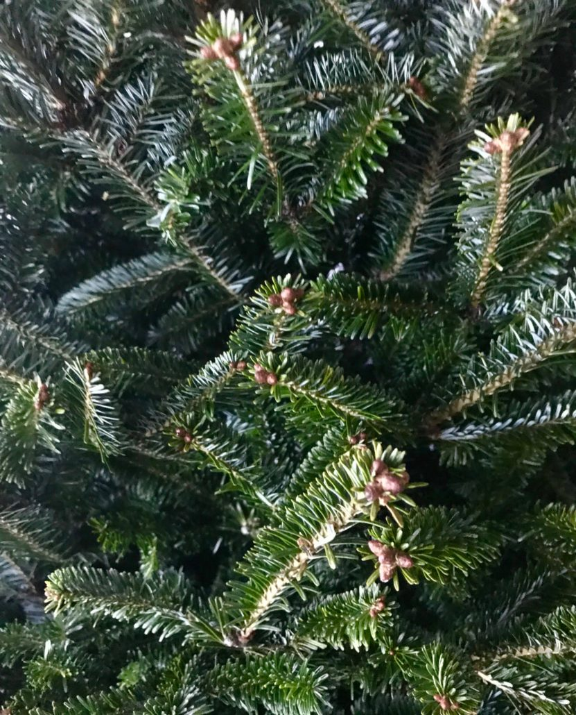 How To Keep A Christmas Tree Fresh And Green - Mirimichi Green