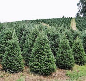 how to keep your christmas tree green and fresh all season long