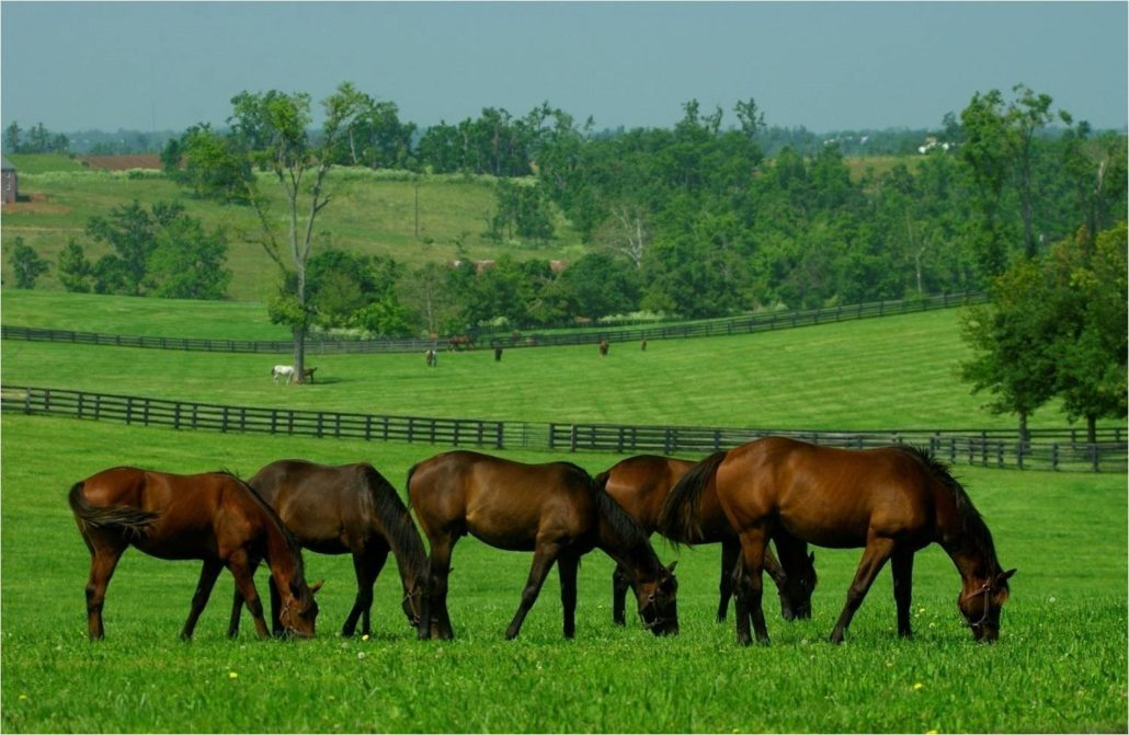 Mirimichi Green Equine Program