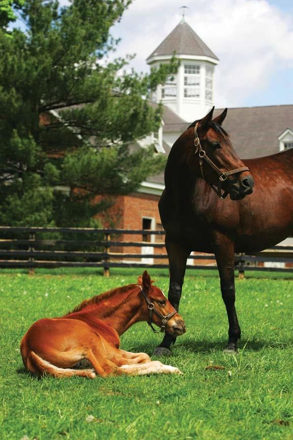 Mirimichi green equestrian program