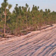 MG Erosion Control - Planting